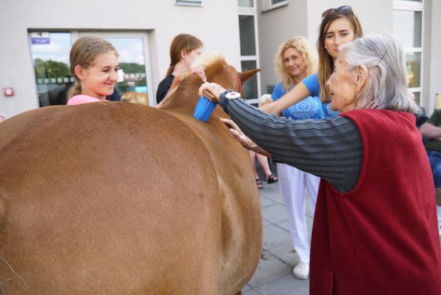 Čištění koně...